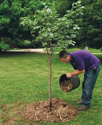 Удобрение плодово-ягодных деревьев