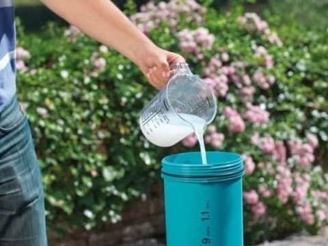 Раствор для полива клубники