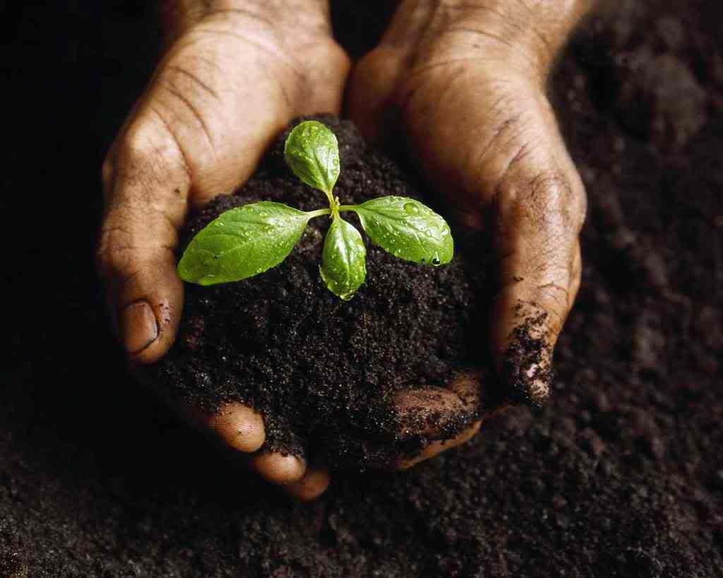 Мочевина как удобрение на огороде: особенности применения