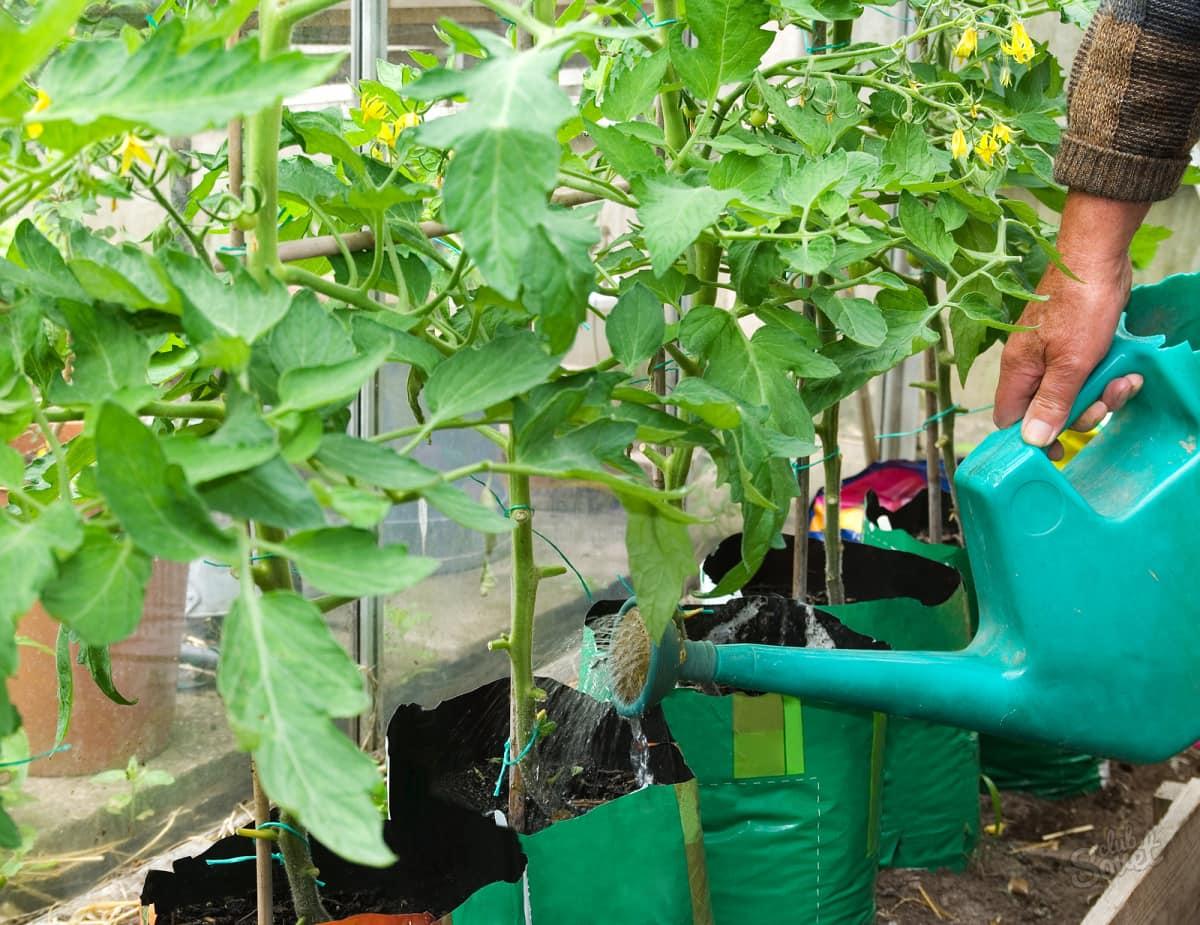 Подкормка помидоров органическими удобрениями