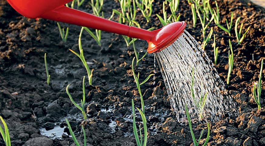 Качественная подкормка – залог хорошего урожая