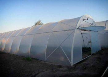 Выращивание грибов: особенности теплицы и ее оборудование