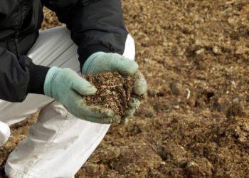 Эффективные подкормки для чеснока весной