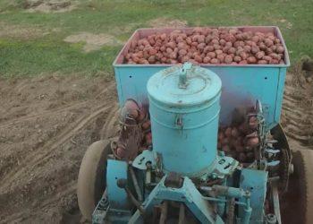 Удобрение ому картофельное: как использовать, преимущества, нормы внесения