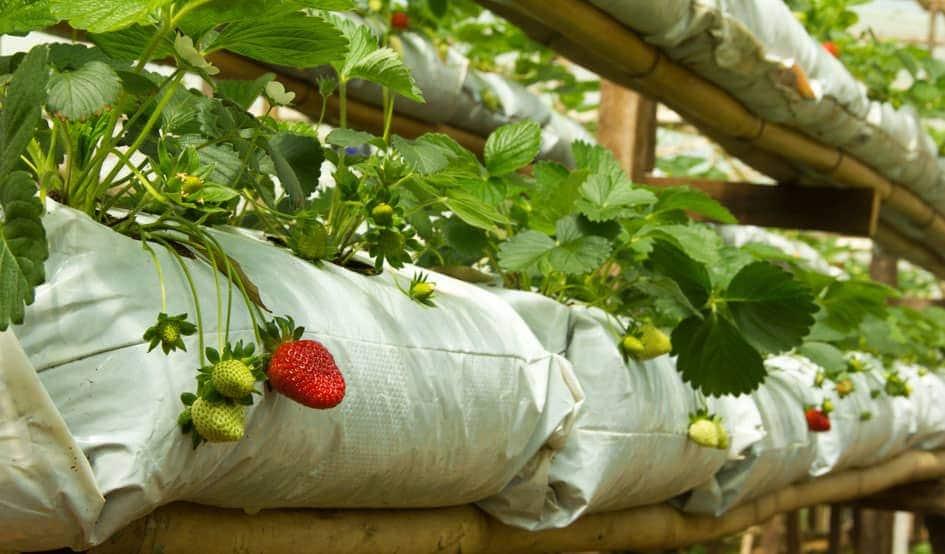 Готовые мешки для выращивания клубники 11