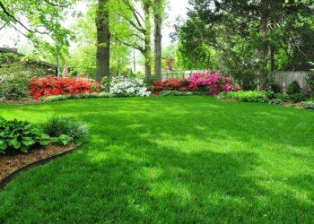 Газонное удобрение: от выбора до внесения