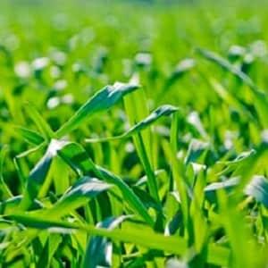 Рекомендации по повышению урожайности зерновых
