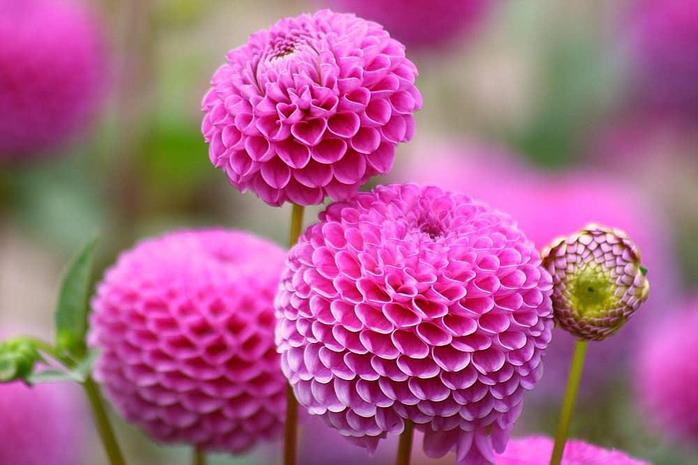 Полив цветов в саду