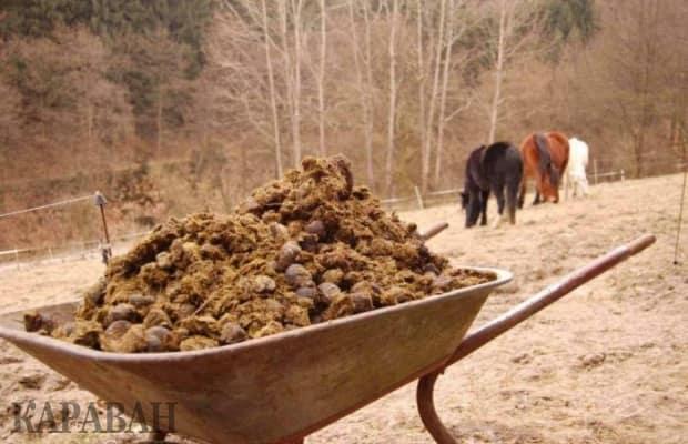Когда вносить навоз в почву, осенью или весной