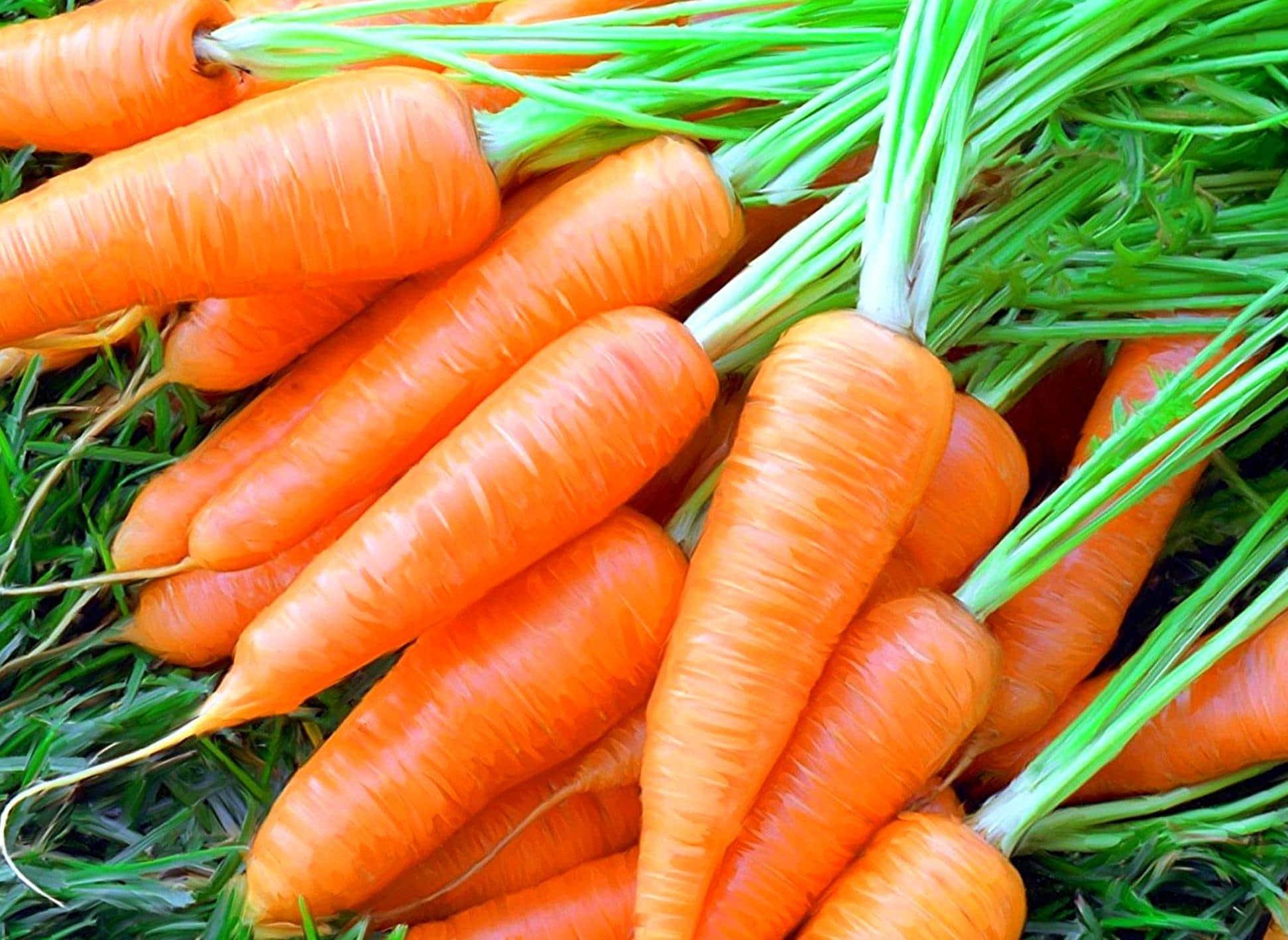 Хлористый кальций в огороде применение