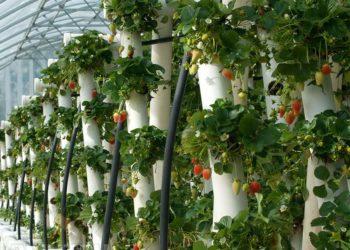 Опыление клубники в теплице — получаем хороший урожай