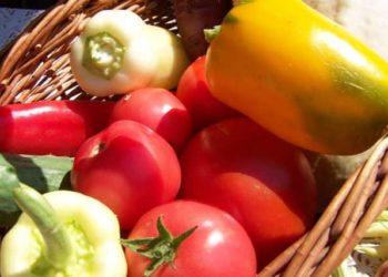 Подкормки для томатов и перцев: закладываем хороший урожай