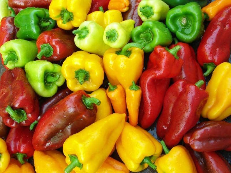 Лучшая подкормка перца для обильного и крупного урожая