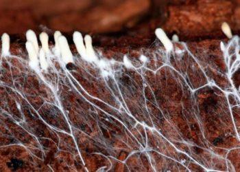 Выращивание грибов в теплице: основные принципы