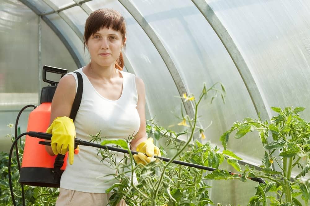 Удобрение суперфосфат применение для томатов
