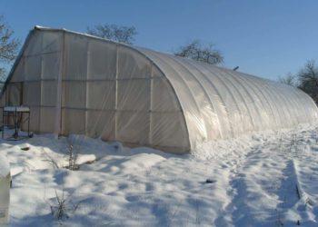 Выращивание грибов в теплице: секреты хорошего урожая