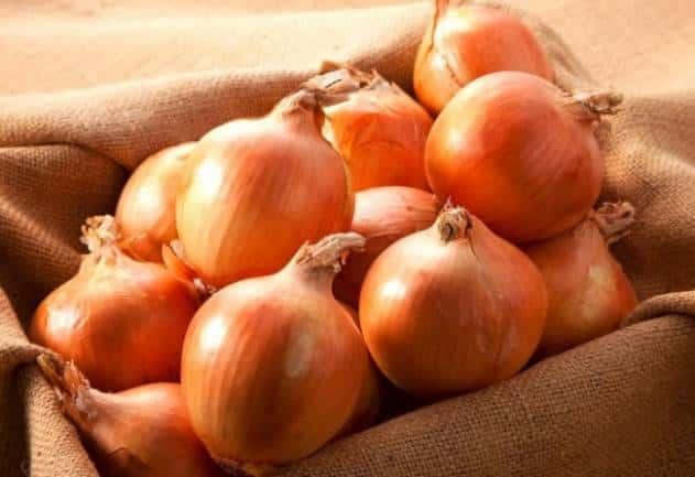 Лучшая подкормка для лука повышаем качество и количество урожая в разы