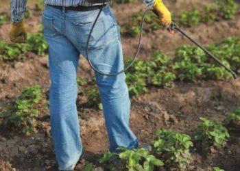 Подкормка золой клубники: советы опытных огородников